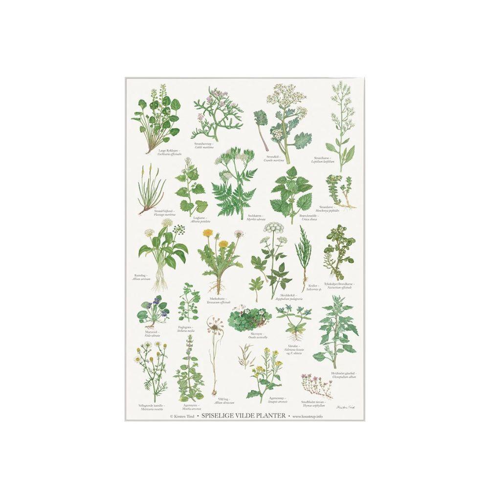 Spiselige vilde planter Plakat A4 Koustrup