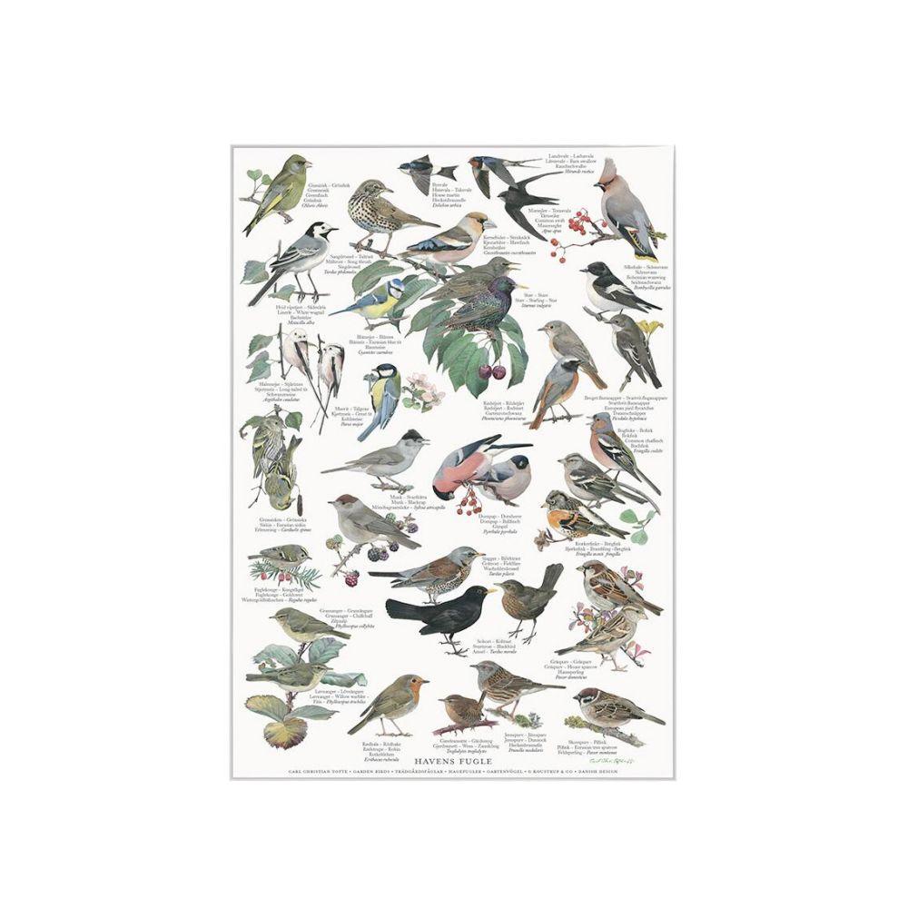 Havens fugle Plakat A4