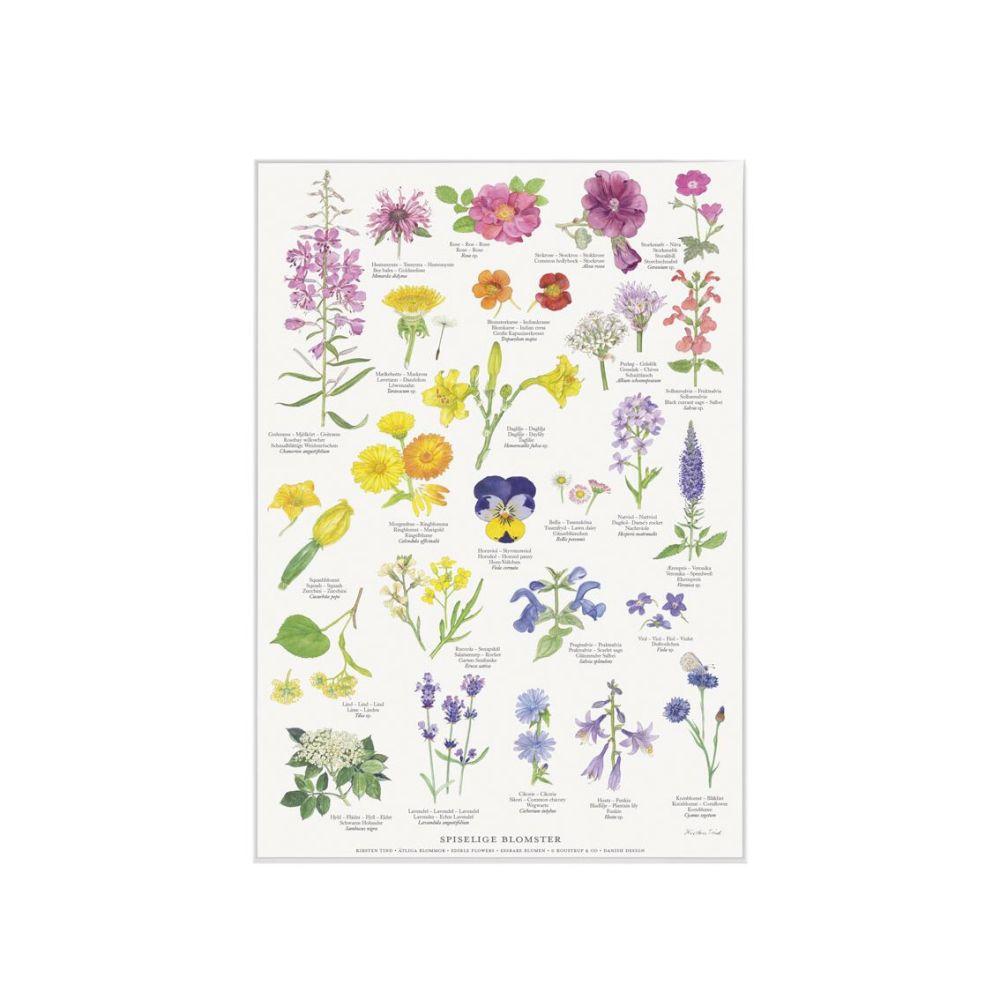 Spiselige blomster Plakat A4