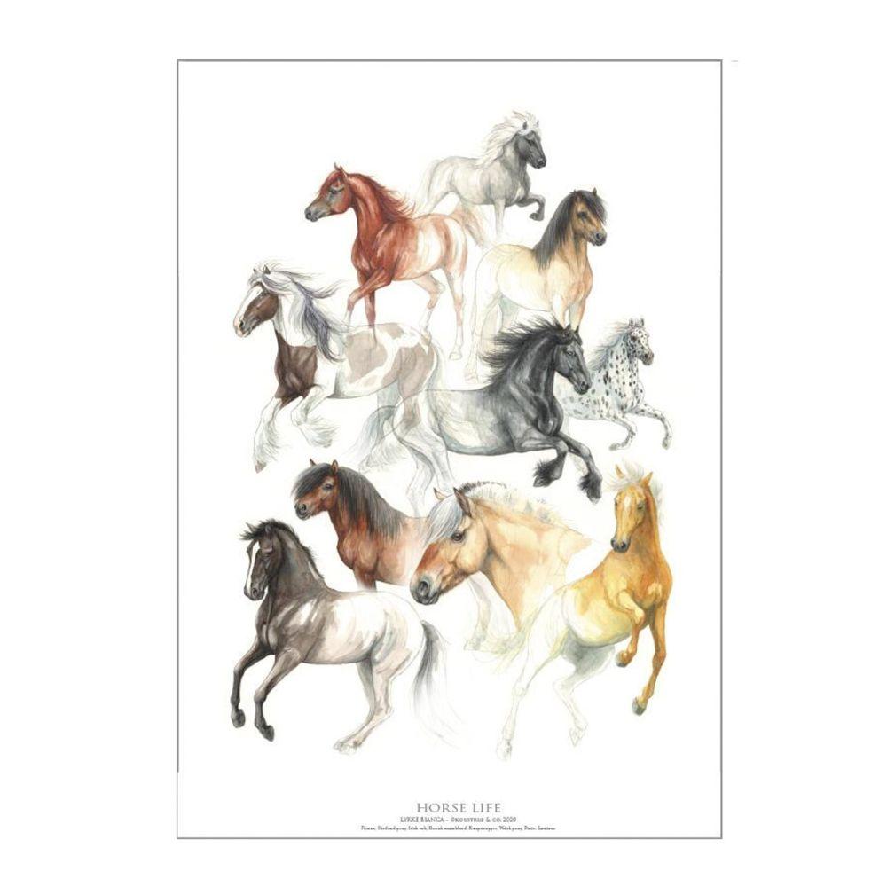 Horse Life Hesteliv Plakat A2