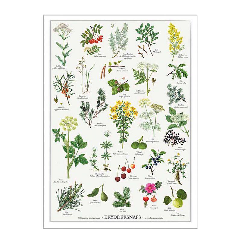 Plakat med urter til kryddersnaps