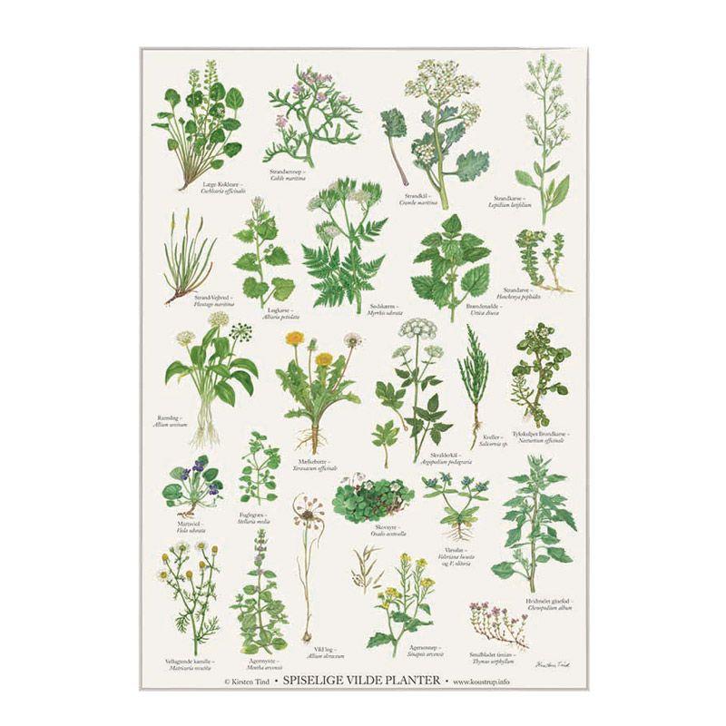 Plakat med spiselige planter A2 fra Koustrup