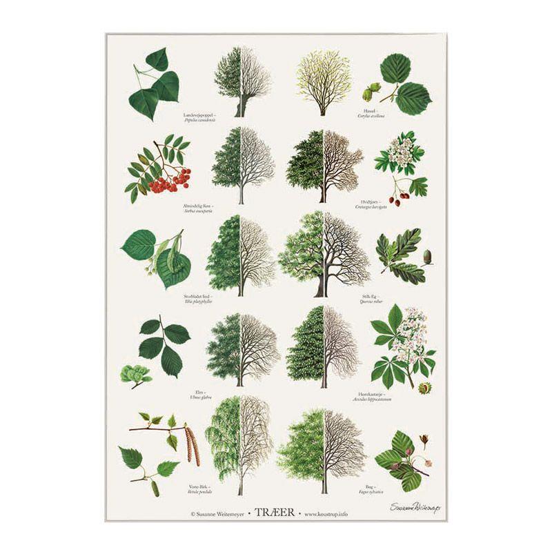Plakat med træer og træsorter fra Koustrup