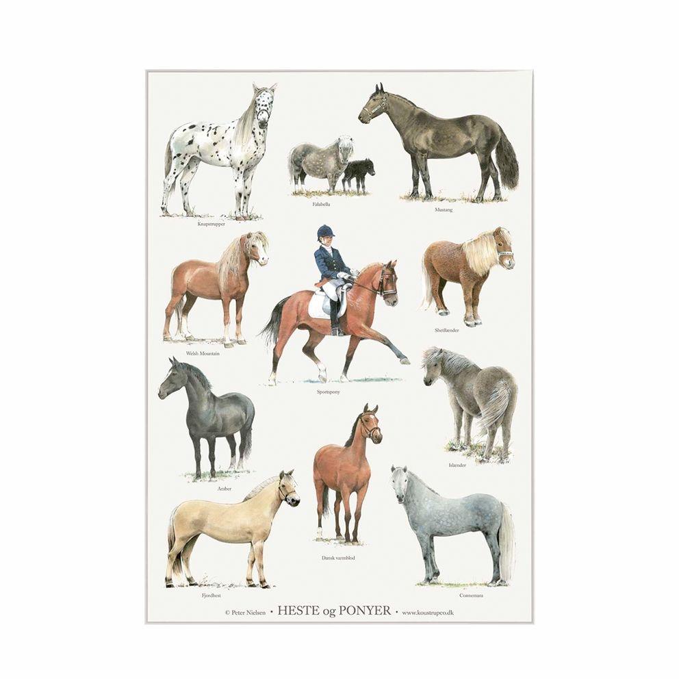 heste og pony plakat