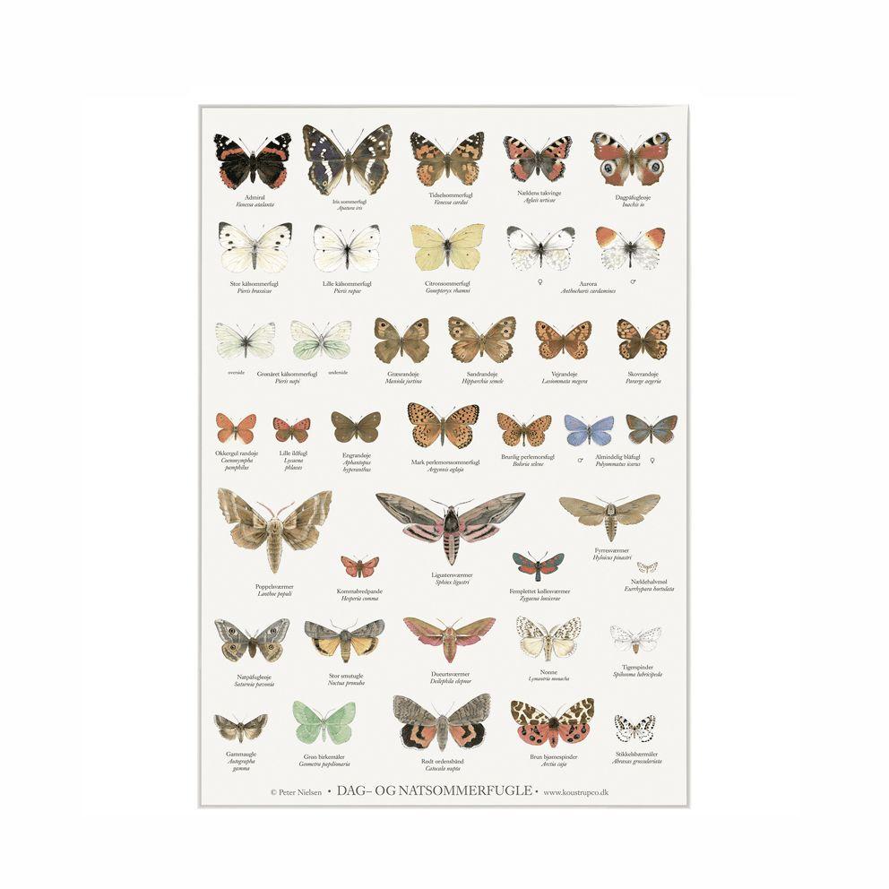 plakat med dag og nat sommerfugle